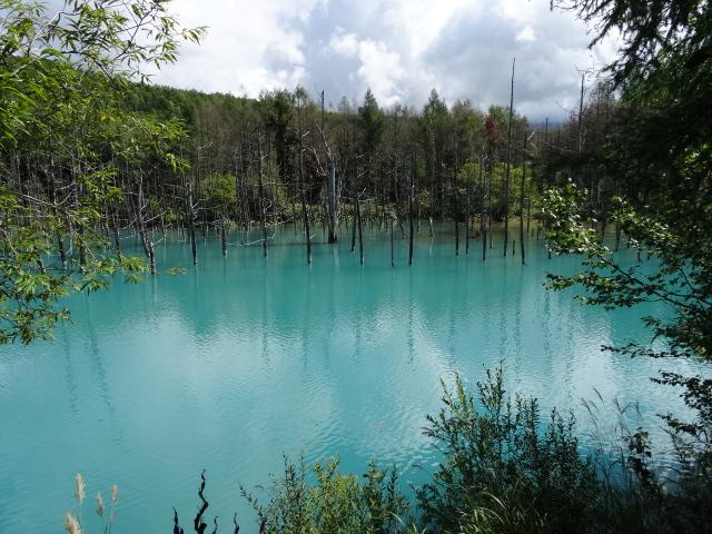 【青い池】