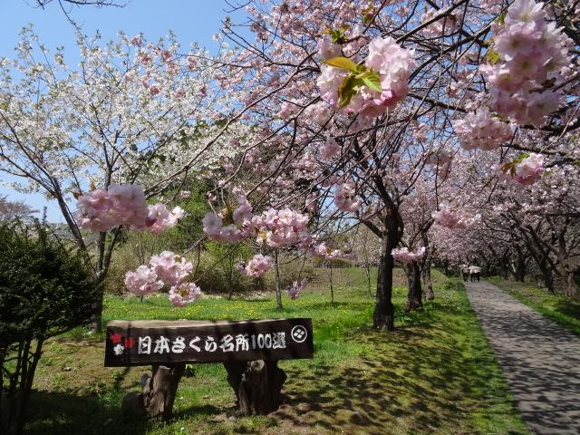 桜の名所100選