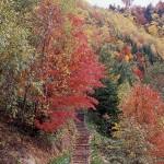北海道で紅葉の絶景を楽しむ【2泊3日】