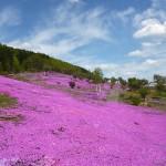 ニセコで芝桜とラフティングを楽しむ日帰りプラン【札幌】