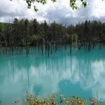 【ニセコ・札幌・美瑛・富良野】北海道の自然を満喫する夏の家族旅行プラン【3泊4日】
