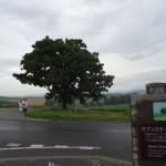 【ニセコ・小樽・美瑛・富良野】GW北海道の自然を満喫する二人旅プラン【4泊5日】
