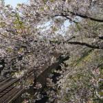 【旭川・札幌・小樽・函館】春の北海道を満喫する夫婦旅プラン【3泊4日】