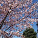 【札幌・千歳】春の札幌を家族で楽しむ旅プラン【4泊5日】