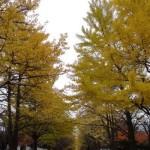 北海道の観光【10月】
