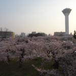 ゴールデンウィークに函館旅行した話【第二部】