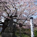 【GW】北海道夫婦二人旅の道南観光プラン【2泊3日】