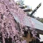 ゴールデンウィーク2泊3日札幌・ニセコ旅行プラン